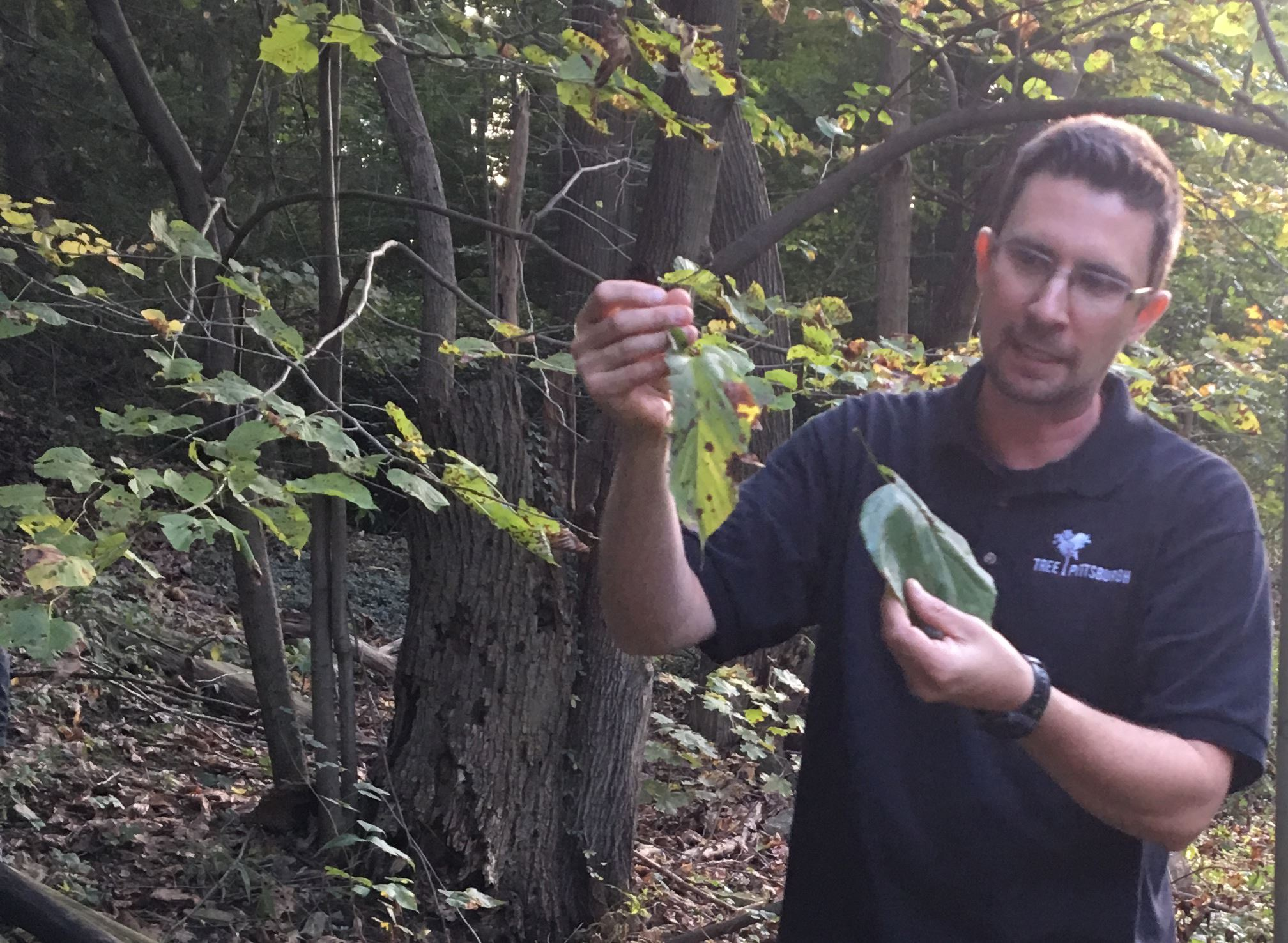 Tree ID Walk in the Park on Oct. 10, 2019